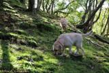 Truffle hounds