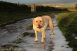 Sunrise Sam