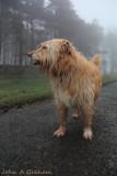 soggy foggy doggy