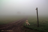 He hasn't got the foggiest