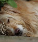 Sleepy Oz