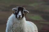 Wot ewe lookin' at?