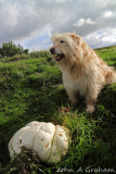 Ozzy and the Giant Puffball
