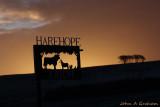 Harehope