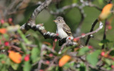 Least Flycatcher_4897.jpg