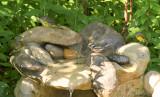 Mourning2 Chestnut-sided Nashville Warblers_5687.jpg