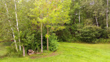 Backyard Bird Bath_832.jpg