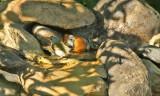 Tennessee Warblers_6527.jpg