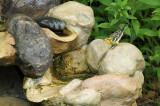 Blackburnian Warbler_7381.jpg