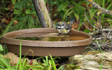 Yellow-rumped Warbler_7535.jpg