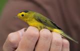 NRF Field Trip 2015 - Bird Banding