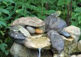 Blackpoll Warblers_9816.jpg