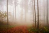Foggy forest scene