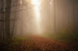 Foggy forest scene 2