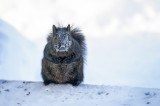 Squirrel on a cold day
