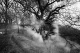 Spirit of the Oaks 3