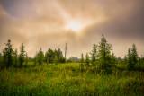 Foggy morning in a bog