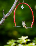 Hummer on a swing