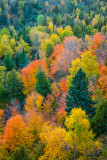 Tapestry of Fall colors