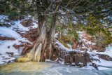 Tree with ice