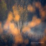 Sunlit trees 2