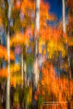 Fall trees, abstract