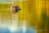 Rock in golden water