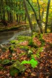 A favorite creek 3