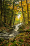 A favorite creek 4