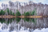 Audie Lake, Birch trees and Spruce reflection