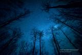 Milky Way peeking through some trees