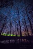 Aurora glow through trees