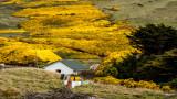 Falklands, South Georgia, and Antarctica - 11/2015