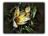 Spring flower....