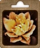 Golden tulip....