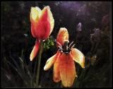 The tulips last dance...