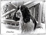 Charlie...