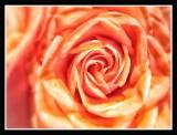 Pretty rosé...