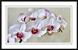 White orchid...