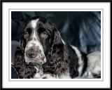 Charlie and Jack's photo album...