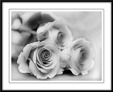 mono roses...