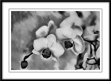 mono orchids...