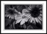 Blooms in mono...