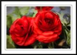 Red Ranucula....