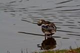 waterfowl_no_2