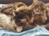 Beau & Sofia