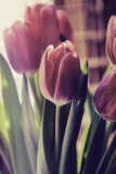 Mid-week Floral