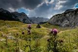 Stari Katun 1800m, Lokvice Valley, Durmitor NP