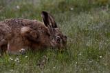 Mammals in Sweden