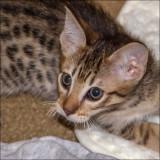 Meet Ozzie